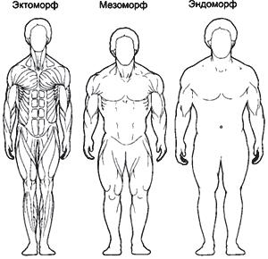 Эктоморфный мезоморфный и эндоморфный типы