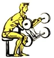 Подъем штанги на бицепсы на изолирующей скамье