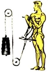 Сгибания рук стоя с использованием блочного устройства