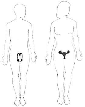 Репродуктивная система тела