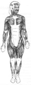 Мышечная система тела