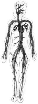 Кровеносная система тела
