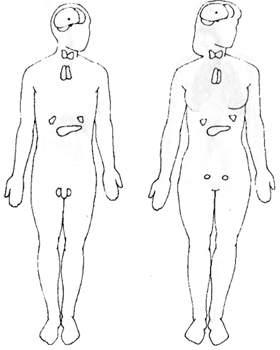 Гормональная система тела