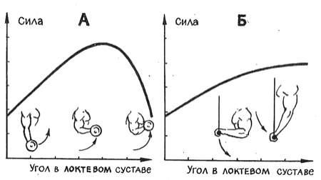 Зависимость силовых показателей мышц рук от суставных углов: А - сгибание; В - разгибание