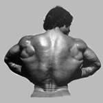 О тренировке широчайших мышц спины