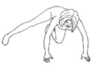 Упражнение сейко