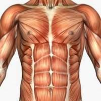Мышцы брюшного пресса atletizm com ua Мышцы брюшного пресса анатомия